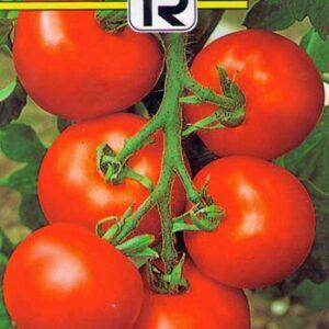 tomate-altamira-f1